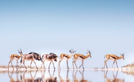 15-Day Best of Namibia Private Guided Safari