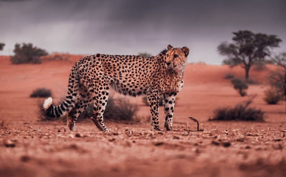 10-Day Namibia Highlights Private Guided Safari